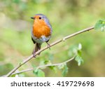 european robin with red breast. ... | Shutterstock . vector #419729698