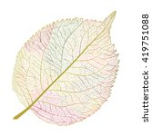 leaf isolated. vector... | Shutterstock .eps vector #419751088