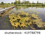 Small photo of algal bloom in lake in Bavaria
