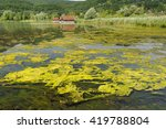 Small photo of algal bloom in lake in Bavaria