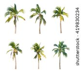 coconut trees on white... | Shutterstock . vector #419830234