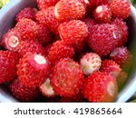 Wild Strawberries. Strawberry...