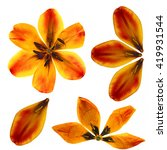 Oil Draw Tulip Perspective ...