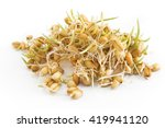 sprouted wheat on a white... | Shutterstock . vector #419941120