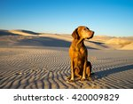Golden Color Dog Sits In The...