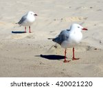 Abstract Seagull Pair On Sand...