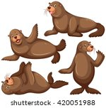 Sea Lion In Four Poses...