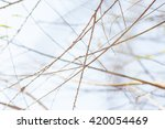 wood branches background | Shutterstock . vector #420054469