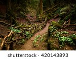 Path Through Puzzlewood  Fores...