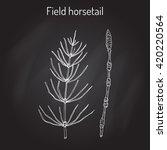 field horsetail  equisetum... | Shutterstock .eps vector #420220564