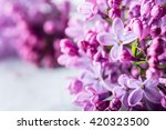 bouquet of purple lilac on... | Shutterstock . vector #420323500