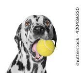 Dog Holding A Ball    Isolated...