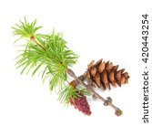 fresh and old cones on a larch... | Shutterstock . vector #420443254