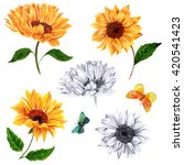 a set of sunflowers and... | Shutterstock . vector #420541423