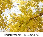 ginkgo | Shutterstock . vector #420656173