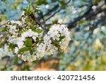closeup of cherry flowers.... | Shutterstock . vector #420721456