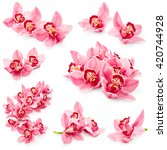 Set Of Orchid Flowers Isolated...
