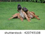 two laughing dogs | Shutterstock . vector #420745108