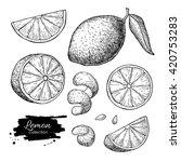 vector hand drawn lime or lemon ... | Shutterstock .eps vector #420753283