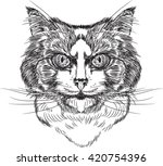 portrait of  domestic cats ... | Shutterstock .eps vector #420754396