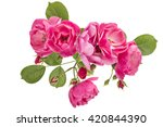 Flowering Branch Of Pink Wild...