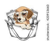 Puppy Beagle In A Glasses And...