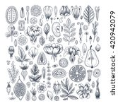 Floral elements background. Linear graphic. Engraved botanical seamless pattern. Vector illustration