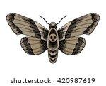 death head moth. hand drawn... | Shutterstock .eps vector #420987619