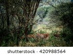 cheetahs in the bushes | Shutterstock . vector #420988564