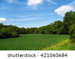 Meadow And Forests In Kokorin...