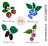 blueberries  raspberries ... | Shutterstock .eps vector #421108870