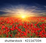 poppy flowers meadow and nice... | Shutterstock . vector #421167334