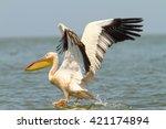 pelecanus onocrotalus great... | Shutterstock . vector #421174894
