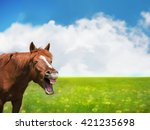 Horse Laughing