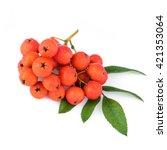 Rowan Berries With Leaves On...