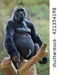 western lowland gorilla ... | Shutterstock . vector #421354198