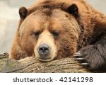 Alaskan Brown (Grizzly) Bear - stock photo