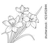 daffodil spring flower or...
