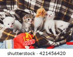 Stock photo kittens and mittens white red and grey newborn kittens in a plaid blanket sweet adorable tiny 421456420
