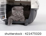 Gray Kittens In Carrying Case