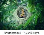 Baby Birds In The Nest Birds...