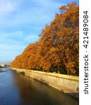 Sycamore trees with yellow autumn leaves on the embankment of the river and bright blue sky - stock photo