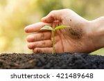 hands growing and nurturing... | Shutterstock . vector #421489648