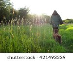 Stock photo backlit grass heads in spring sunset dog walking 421493239