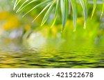 natural defocused and depth of... | Shutterstock . vector #421522678