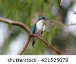 collared kingfisher | Shutterstock . vector #421525078