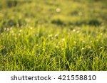 green grass background bokeh... | Shutterstock . vector #421558810