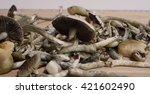 crop of magic mushrooms drying... | Shutterstock . vector #421602490