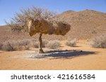 Tree In Tirasberge  Namibia...