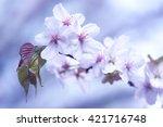 sakura. cherry blossom in... | Shutterstock . vector #421716748
